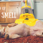 Remove the Smell of Dog