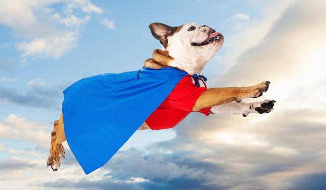 一年の計は本日にあり〜犬を素敵な伴走者にして、今日から始める新たなチャレンジ | the WOOF イヌメディア