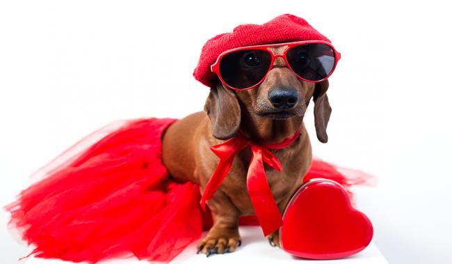 犬好きさんとデートするなら知っておきたい7つのこと | the WOOF イヌメディア