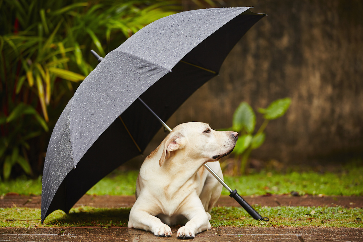 Shutterstock 182455064