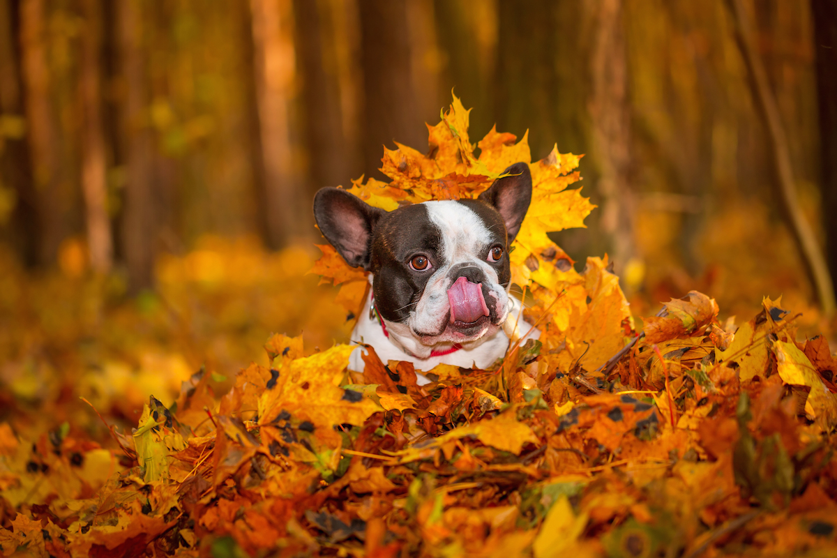 Shutterstock 228255100
