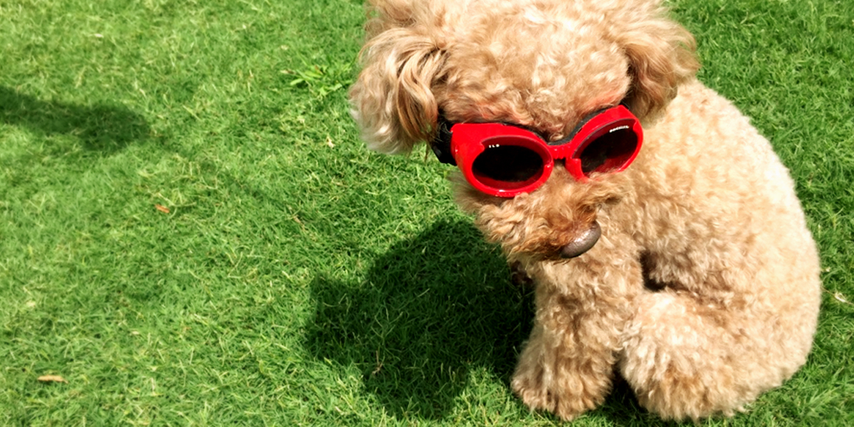 lychee_doggles2_Fotor