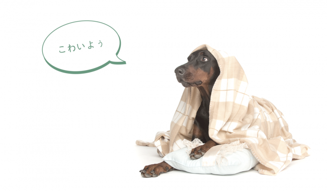 爆発音からワンコを守れ〜「花火と犬」「雷と犬」は最悪の組み合わせなんだよ | the WOOF イヌメディア