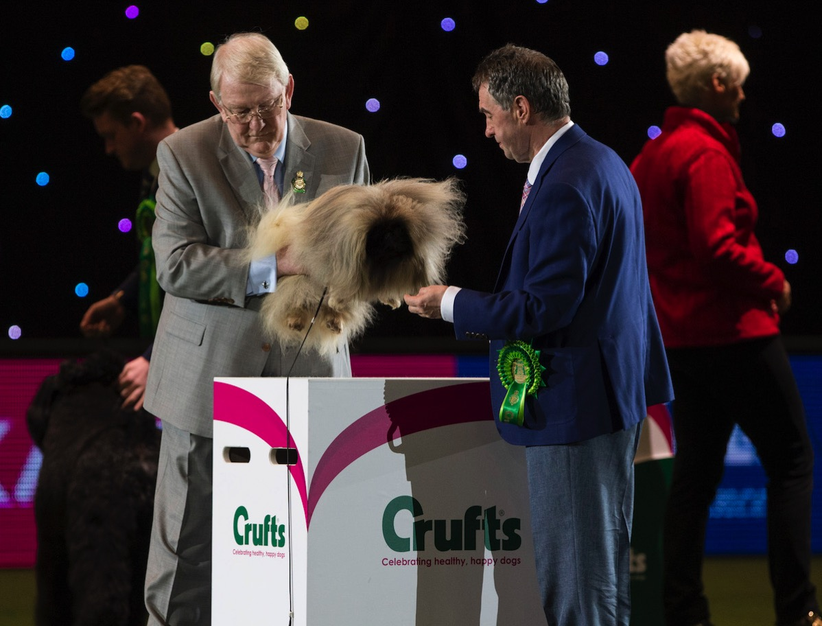 Crufts2016 BIS MD0412